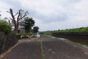 勢田川右岸のハマボウ(浜郷小学校記念公園)付近