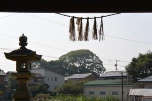 高向大社から遠望する宇須乃野神社(豊受大神宮摂社)の社叢