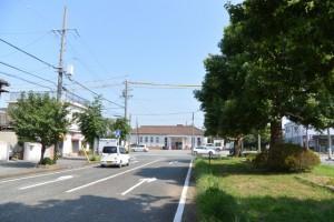 JR参宮線山田上口駅前通、クスノキの並木