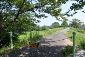 宮川右岸堤防を桜の渡し場跡方向へ