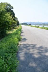 癒しの森付近(宮川右岸堤防道路)