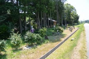 癒しの森(宮川右岸堤防道路付近)