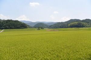 川原神社(皇大神宮摂社)付近の田園風景