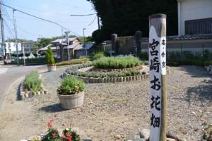 宮崎お花畑(御木本道路 岡本一丁目交差点付近)