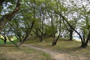 駿河堤(宮川右岸)