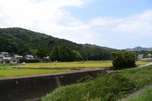 稲刈り作業中(鳥羽市河内町)