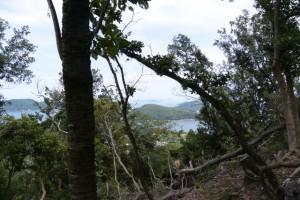樋の山山頂の風景