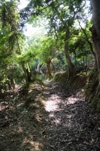 藤之郷から赤崎への山越え