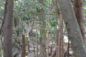 サルとの遭遇(藤之郷から赤崎への山越え)