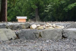 消えたお気に入りの丸い石(外宮古殿地)