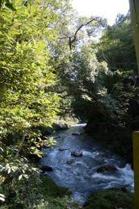 取水場? 付近から望む藤川の上流方向