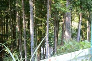 旧金輪橋(藤川)、左岸側から遠む新しい金輪橋