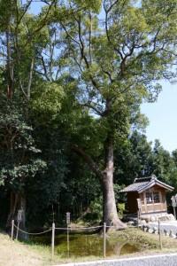 (11) 千田の御池