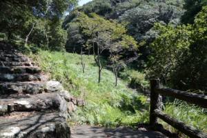 倭姫機織場への分岐(鸚鵡岩付近)