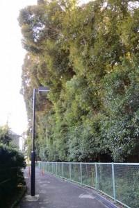 佐美長神社(伊雜宮 所管社)の社域を取り囲むフェンス