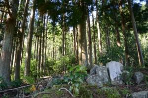 五輪塔、墓石(伝向井将監屋敷跡付近)(地図No.1)