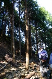 野見坂隧道入口(度会町南中村側)付近から昇龍の滝へ