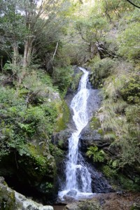 昇龍の滝(度会町南中村)