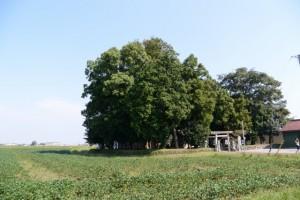 須賀神社(松阪市井口中町)付近
