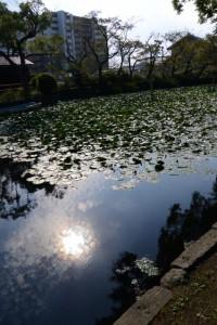 河原淵神社(豊受大神宮摂社)の前に広がる朧ケ池