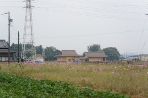 斎宮跡、方格地割の外周道路(北側)から遠望する復元建物