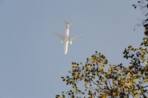 外宮で見上げた空、大きい?飛行機