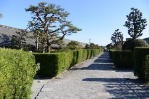 御城番屋敷の槙垣と石畳(松阪市殿町)
