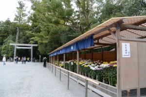 国華会による菊花奉納・展示(外宮