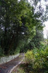 アスファルト舗装された多岐原神社への参道