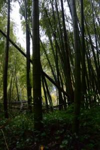 多岐原神社(皇大神宮摂社)付近の竹林から望む滝