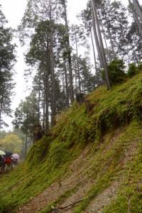 「トイレ1200m」の道標〜ブナの大木