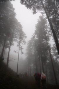 ブナの大木〜「トイレ100m」の道標