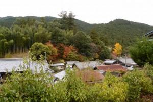 波瀬神社の社叢の遠望
