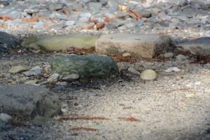お気に入りの丸い石が姿を消した古殿地の宿衛屋付近(外宮)