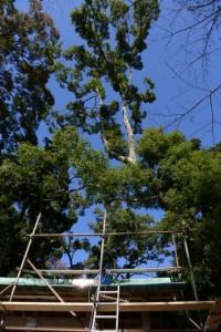 落下した枝で破損した拝殿の屋根の修繕(賀多神社)
