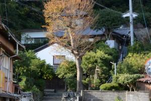 妙慶川に架かる相橋から望むケヤキ