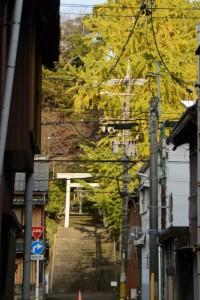 大山祇神社への参道、階段脇に立つイチョウ
