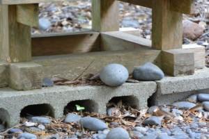 仙宮神社の丸い石(南伊勢町河内)