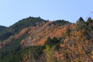 多岐原神社付近から望む紅葉した山々