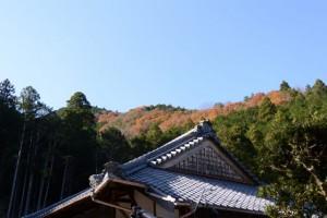 龍谷山 妙楽寺と山の紅葉(度会郡大紀町三瀬川)