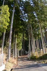 船木神社への参道(度会郡大紀町船木)