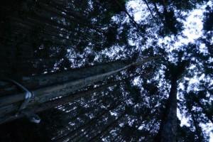 竹の先端に取り付けられた神札ほか(船木神社からさらに上)