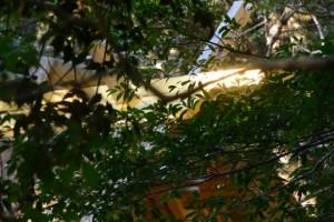 若宮神社への参道から望む瀧原宮