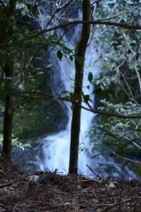 長由介神社付近から望めた滝