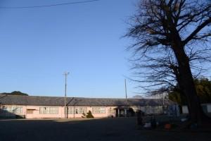 旧七保第一小学校と七保のお葉つきイチョウ