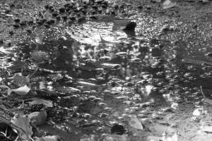 「モノクロームな日々」20151212