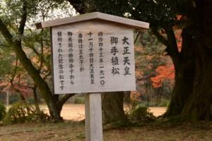 大正天皇御手植松の説明板