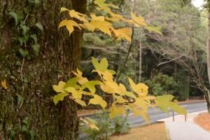 「倭姫文化の森」散策路の紅葉