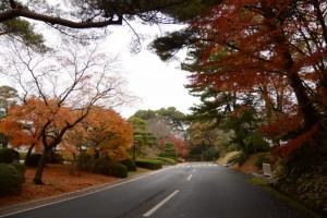 紅葉(倭姫文化の森 - 倉田山逍遥 - )