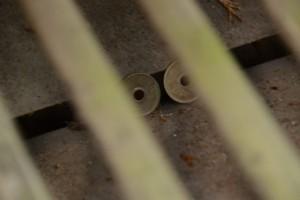 賽銭箱に残された二枚の五円玉(合格神社)